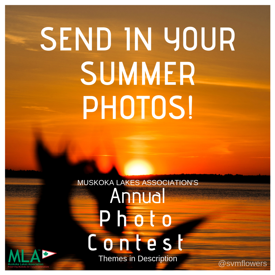 MLA Photo Contest